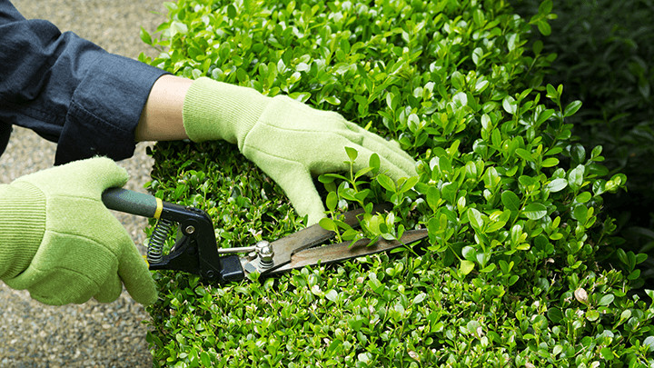 Image of Garden Maintenance